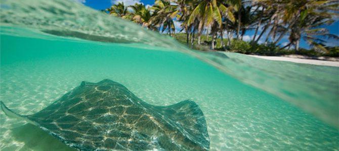 El Caribe Mexicano, registro un crecimiento de 2,2% en 2016